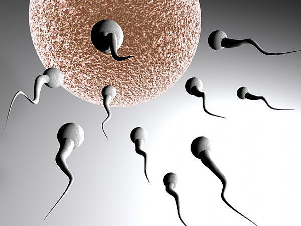 increase sperm volume